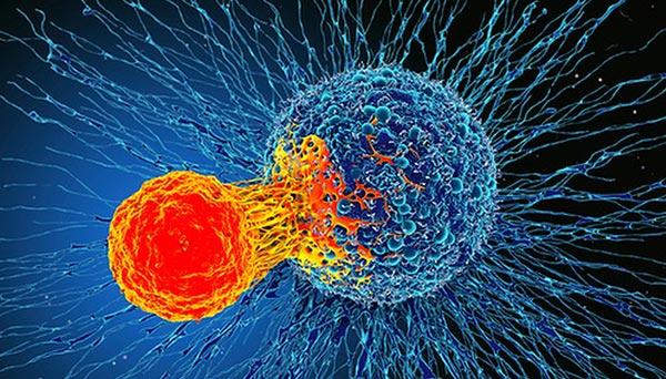 phòng chóng ung thư với sâm canada