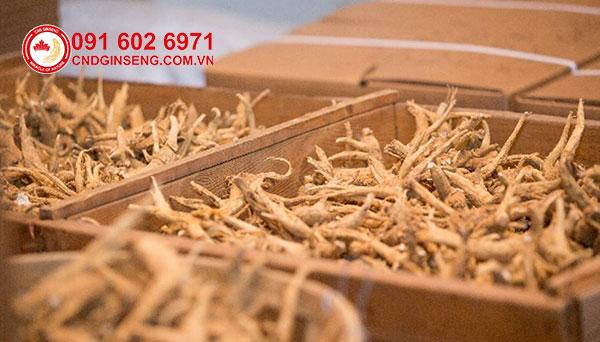 công nghệ sản xuất sâm khô canada