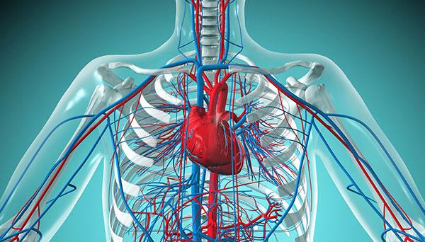 hệ thống tim mạch