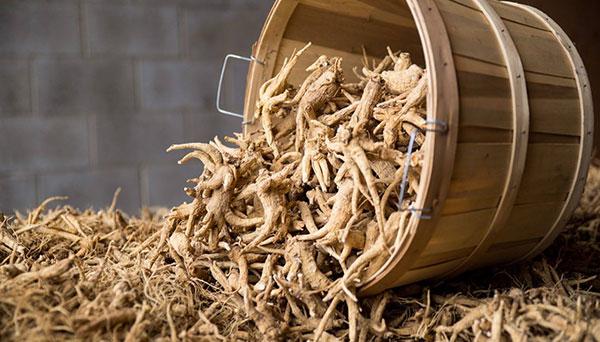 các giai đoạn sản xuất bột nhân sâm